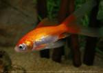 petit - Fish