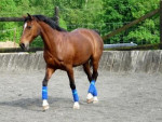 Flicka - Horse (4 years)